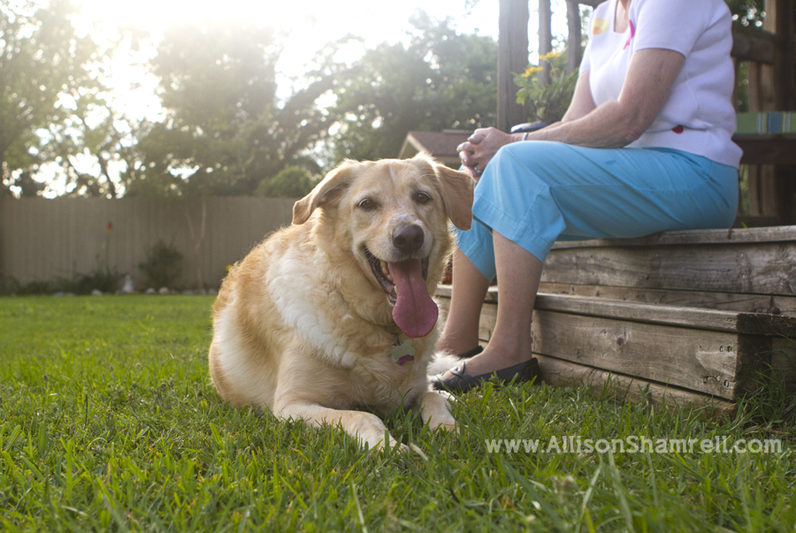 A labrador/golden retriever mix laying down in her Florida backyard, with her owner.