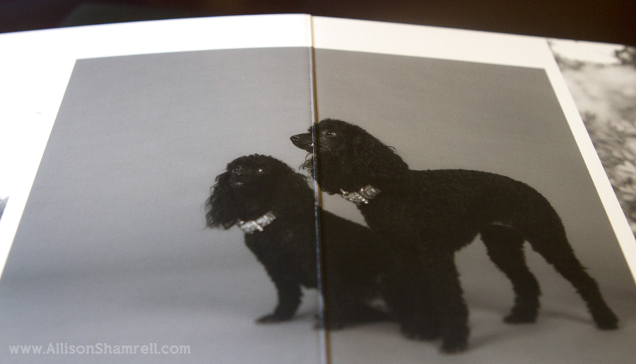 A photo of a partial spread inside a premium dog photography album featuring two black miniature poodles.