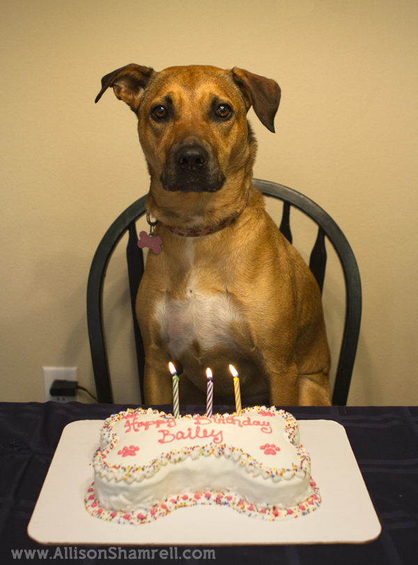 Photo of a dog with her birthday cake.