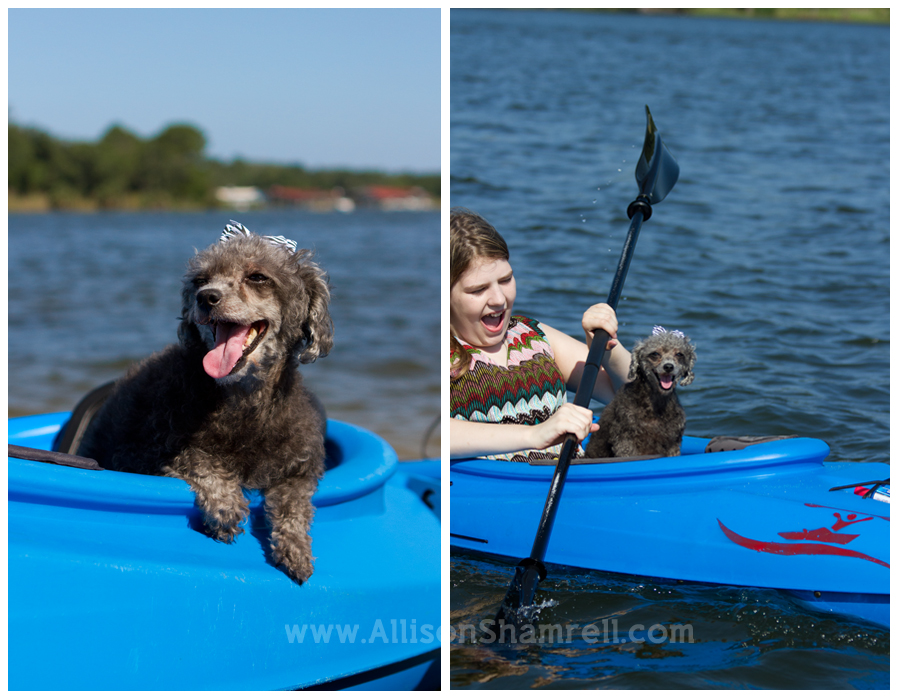 A grey miniature poodle in a kayak with her owner in Pensacola, Florida.