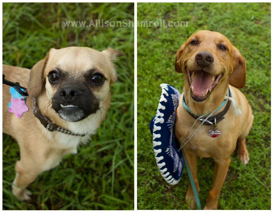Photo of two dogs at Dog Days of Summer 2012 in Milton, Florida.