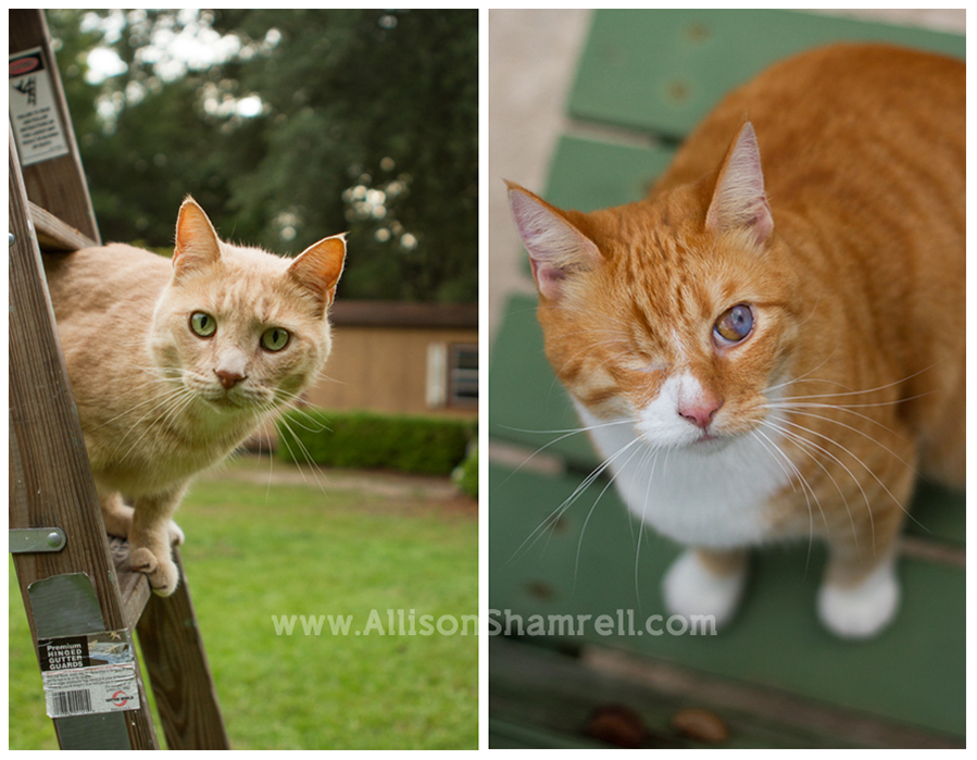 Two orange cats perch on a ladder and look up at the camera.