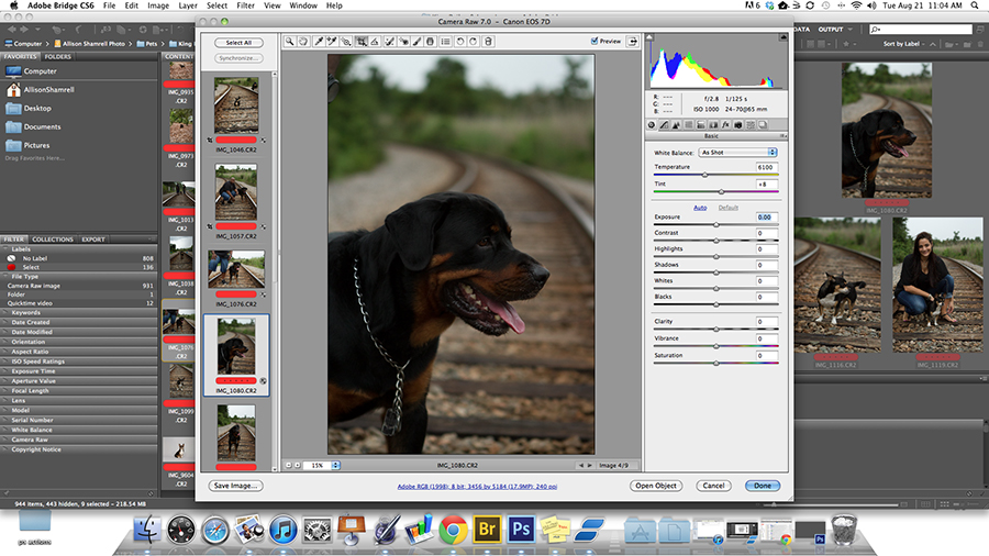 Post-processing blog about digitally enhancing a dog's photo.