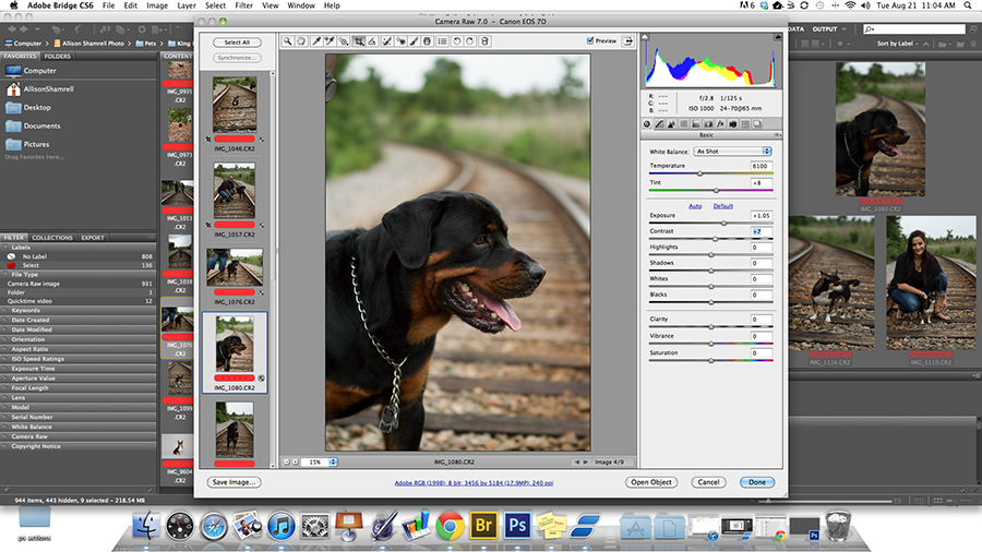 Post-processing blog about digitally enhancing a dog's photo in Adobe Camera RAW.