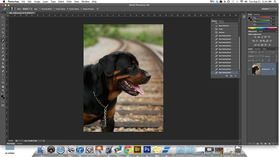 Post-processing blog about digitally enhancing a dog's photo in Photoshop CS6.