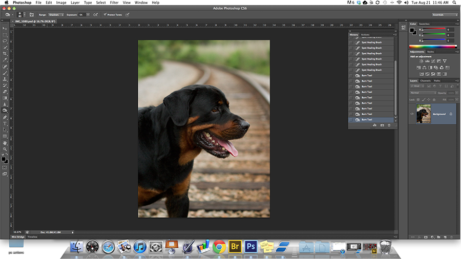 Post-processing blog about digitally enhancing and finalizing a dog's photo.