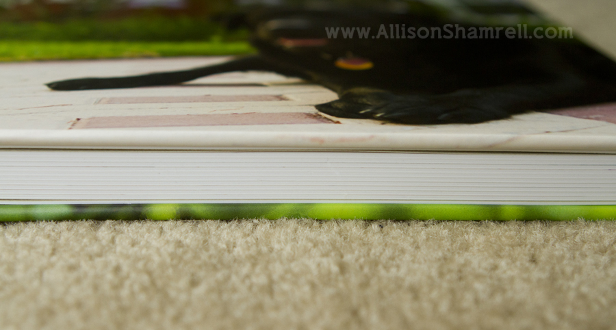A side view of the pages of a high-quality professional photo album featuring a black labrador.