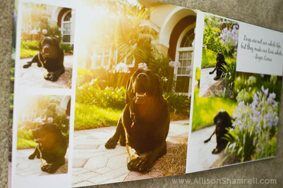 A professionally-design album page spread of a happy labrador.