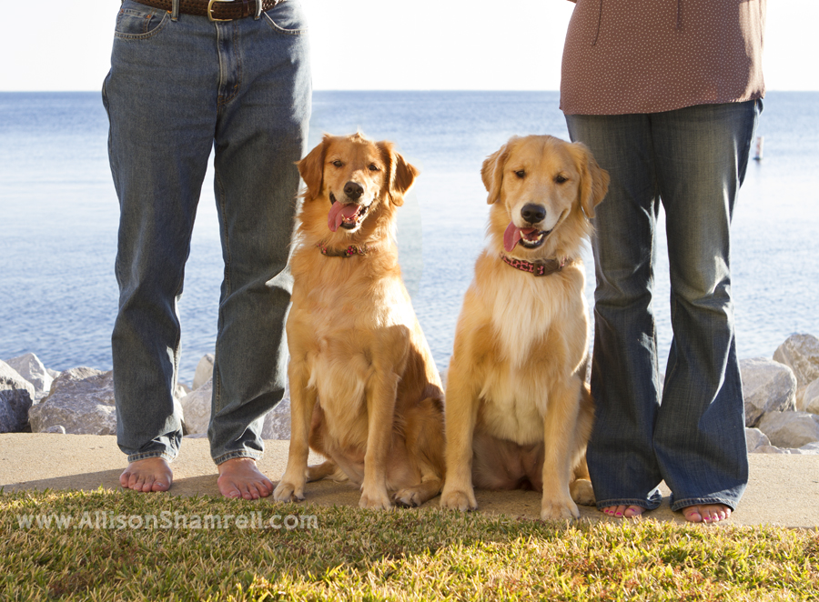 Two golden retrievers sit with their parents by Pensacola Bay.