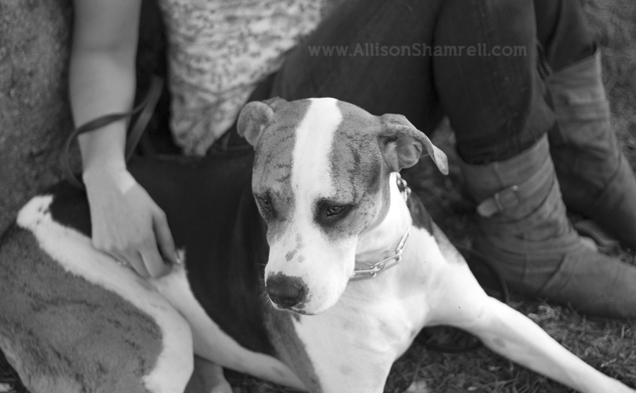 A hound mixed breed dog sits with his owner, black and white.