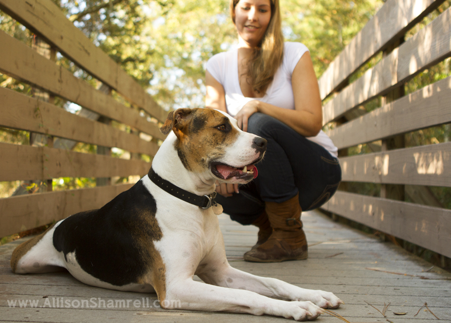 A hound mixed breed dog sits with his owner on a wooden walkway.