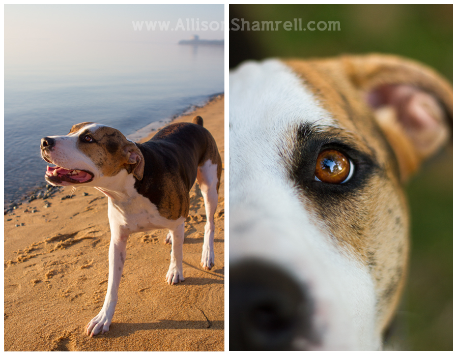 Two photos of a hound mix dog at the beach and in the park.