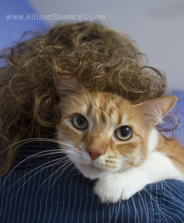 Photo of an orange cat looking down from his perch on a woman's shoulder.