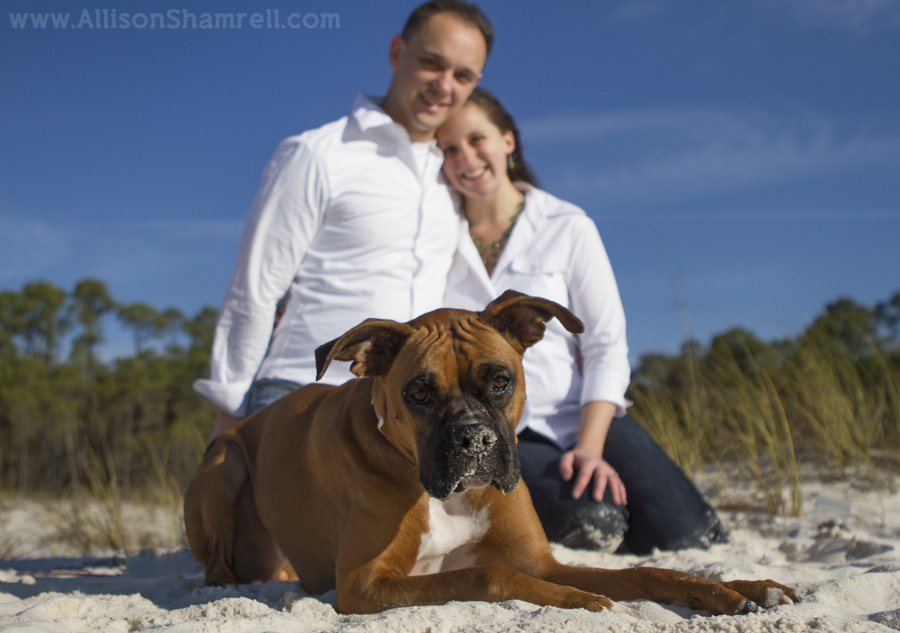 A boxer and her two young parents relax on Pensacola beach.