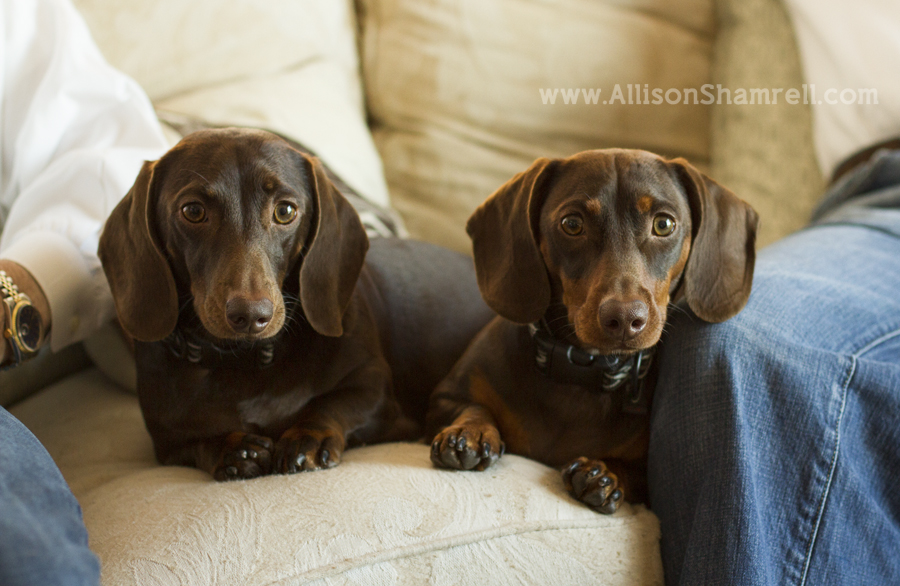 Two dachshunds are sandwiched in between their owners on the couch.