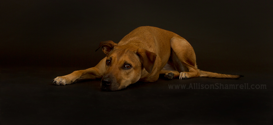 Blog post about a pet photographer announcing a relocation across the country.