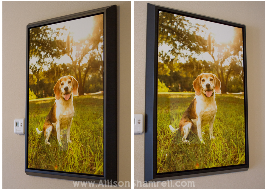 metal_prints_dog_photography_1
