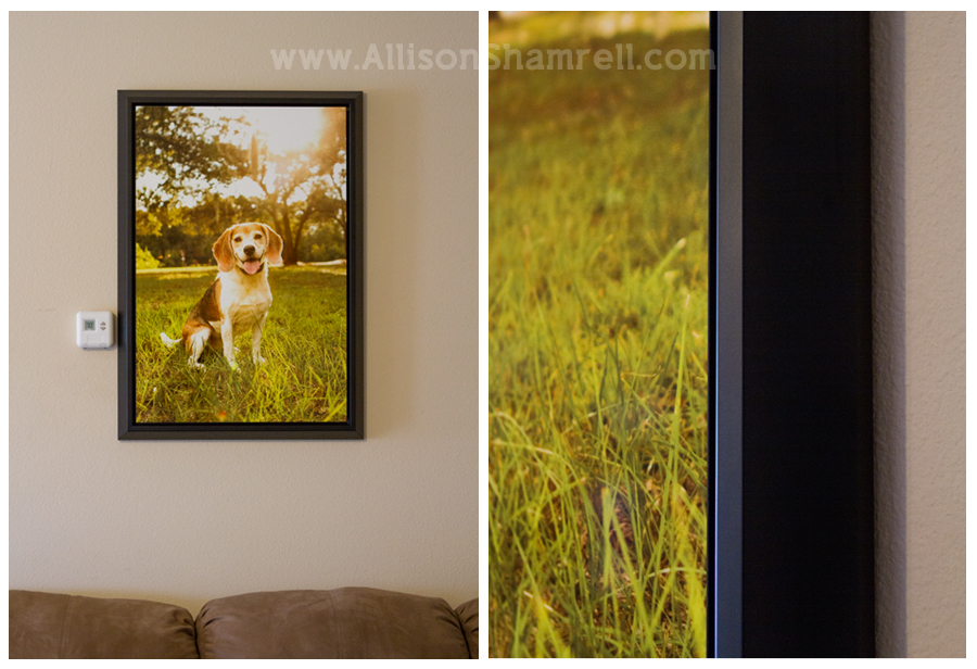 metal_prints_dog_photography_2
