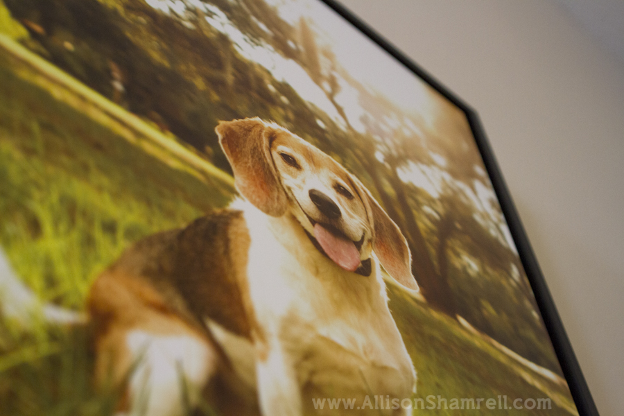 metal_prints_dog_photography_5