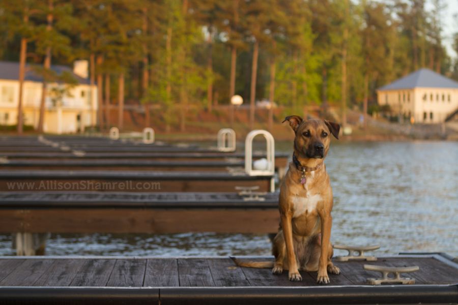 dock pet photography