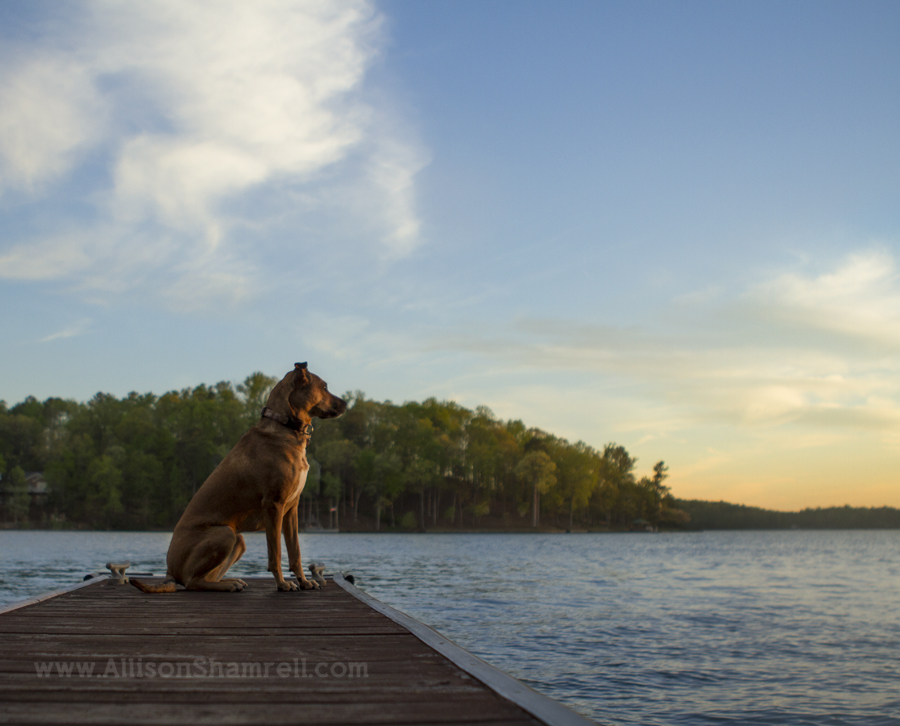 lakeside destination pet photography
