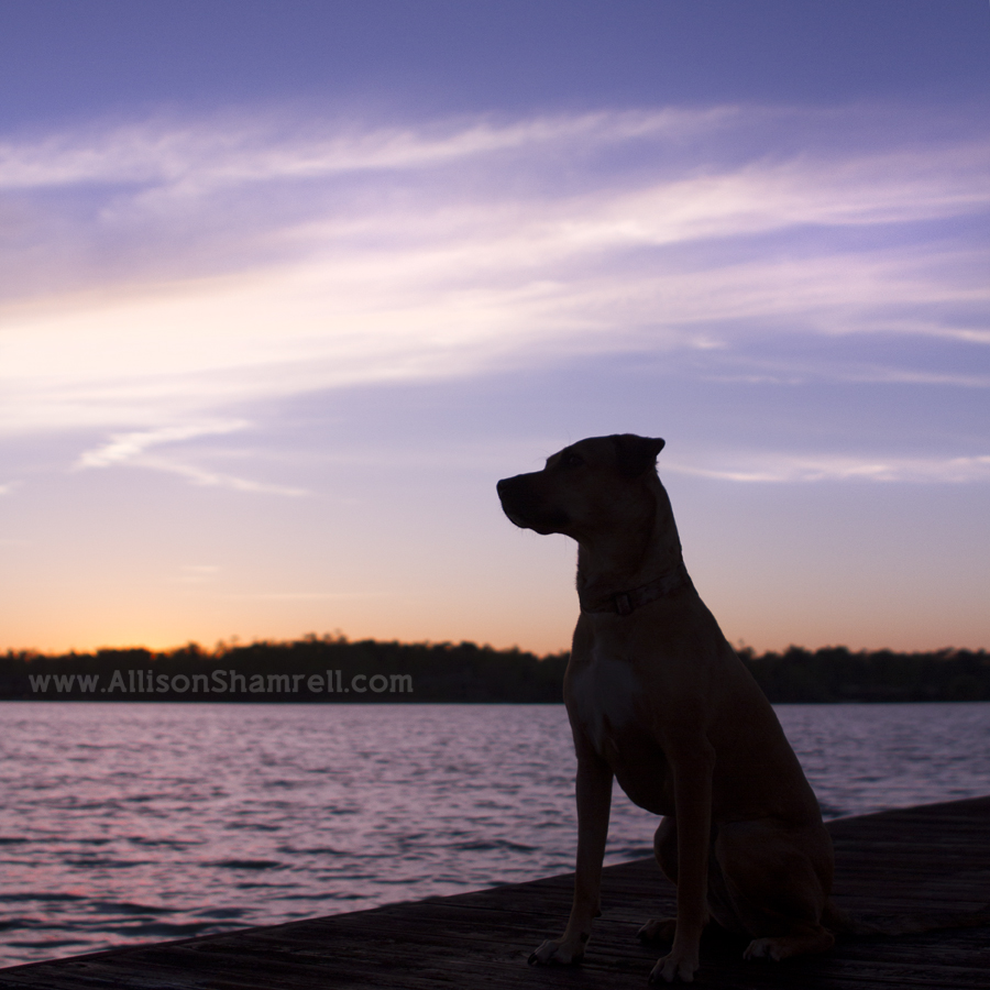 lakeside sunset pet photography