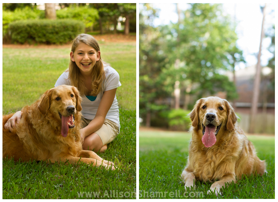 golden retriever dog in pretty park