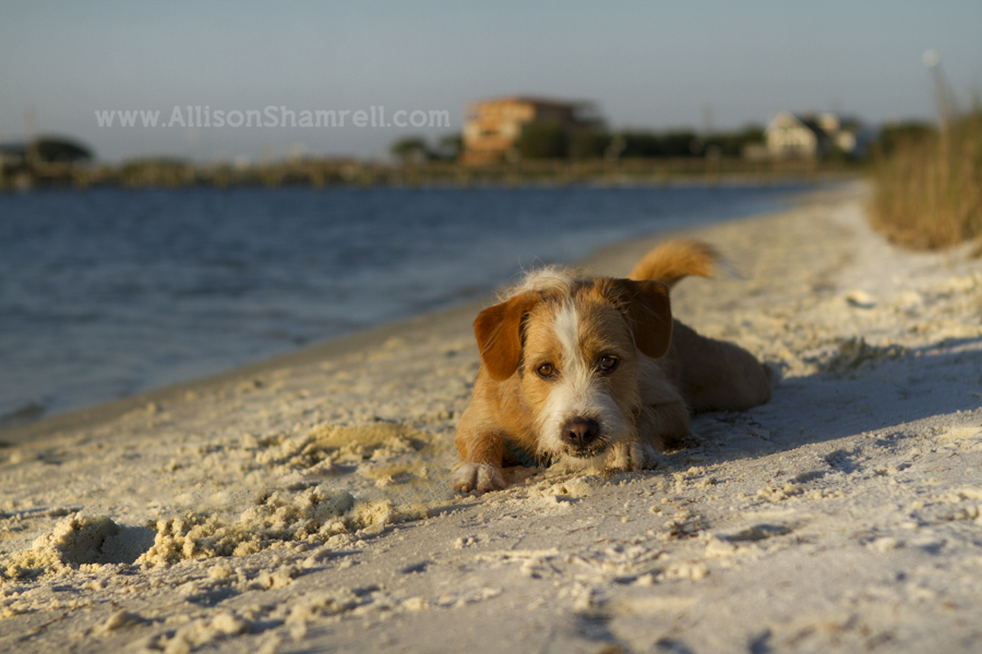 mixed breed dog on beach