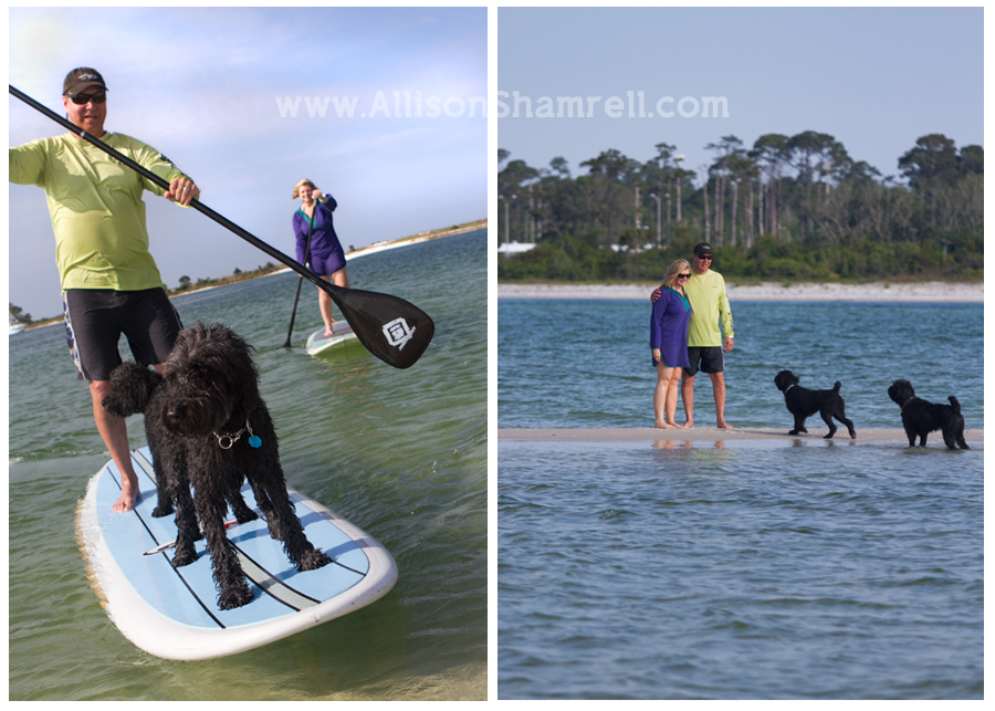 paddleboarding dogs