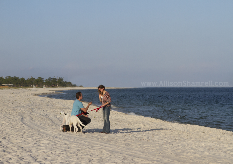 surprise wedding proposal with dogs