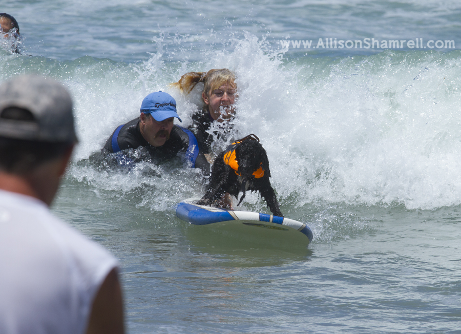 people and dogs surfing