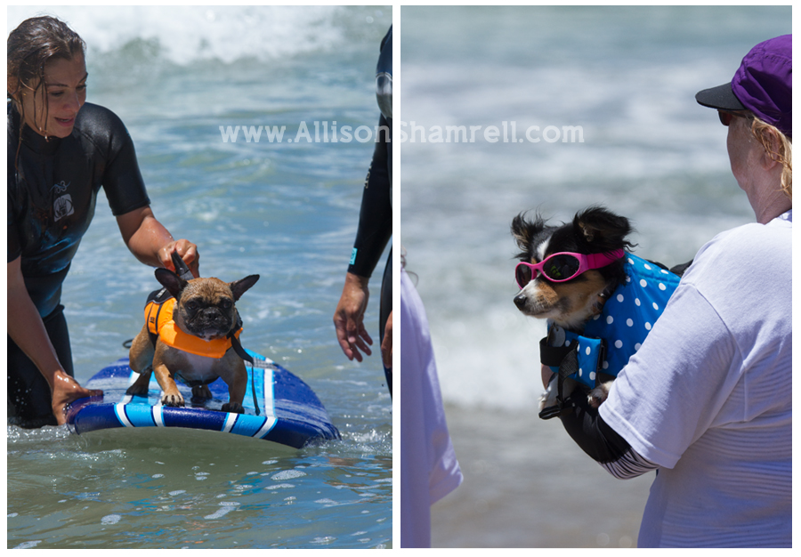 dogs at surfing competition