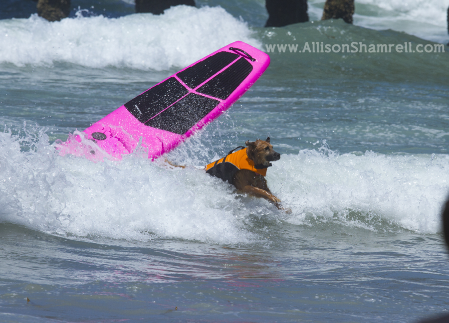 dog wiping out
