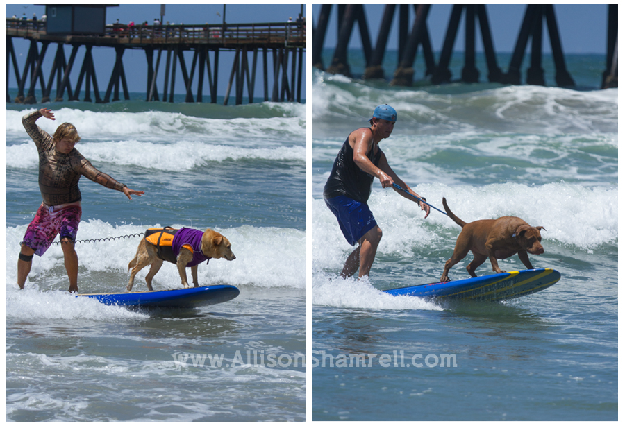 people and dogs surfing together