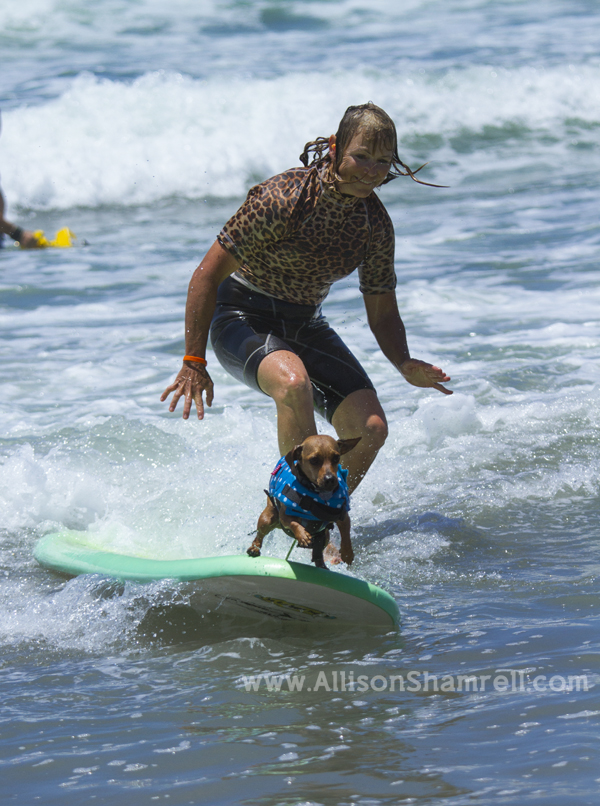 awesome dog surfing action