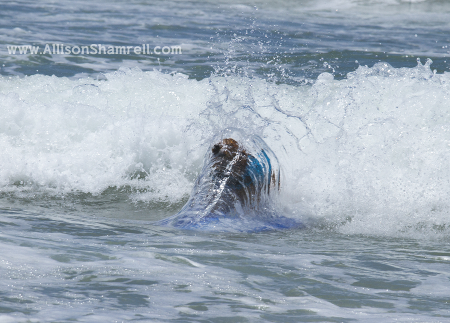 surfing dog action