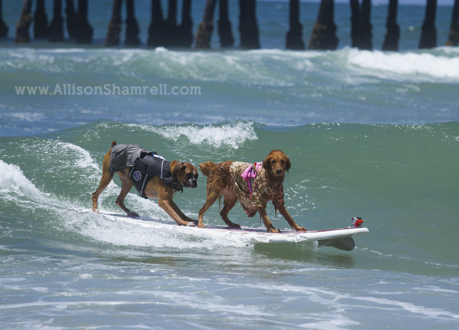 two dogs one surfboard
