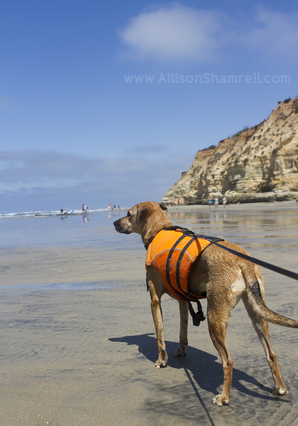 del mar dog beach view
