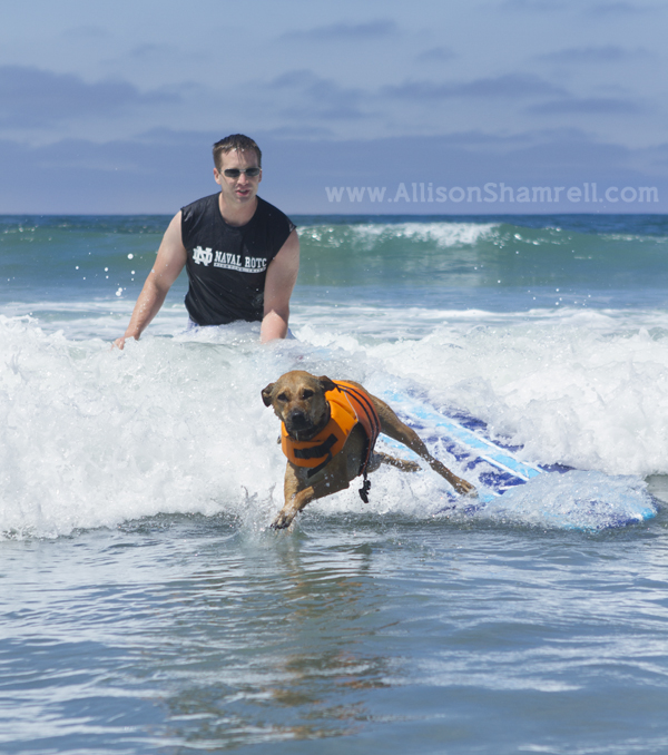 dog surf wipeout