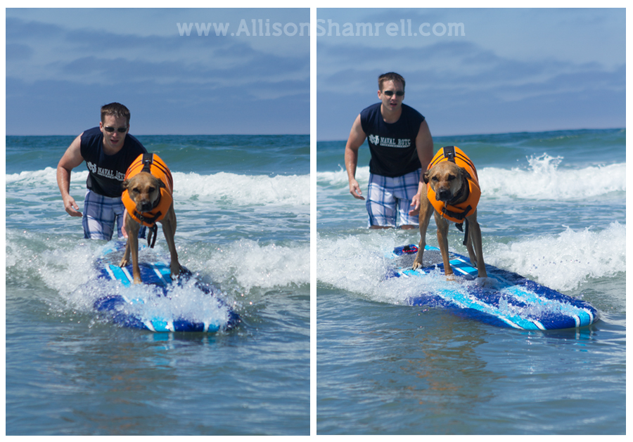 fun dog surfing photos