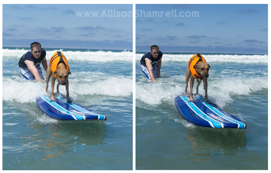 dog surfing detailed