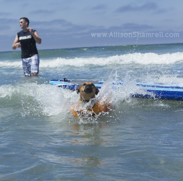 dog surfing wipeout