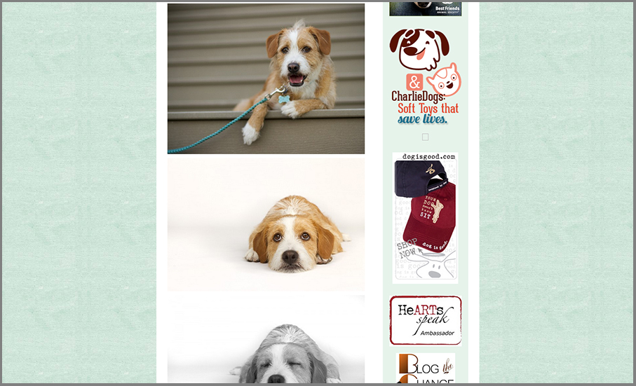 pet photography work featured