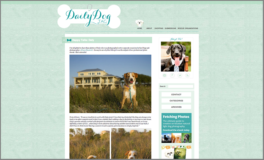 san diego dog photography featured