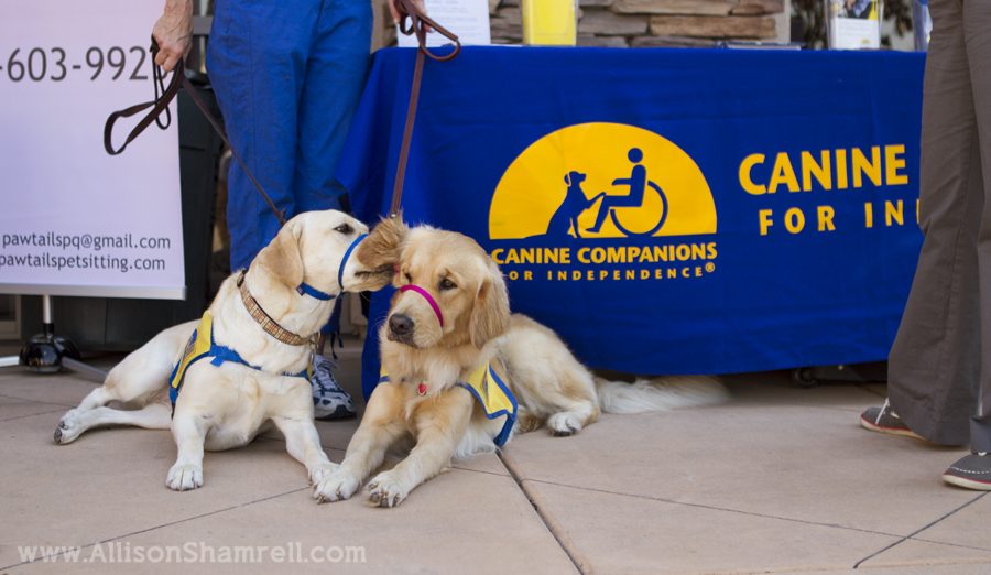 dogs at a vet grand opening