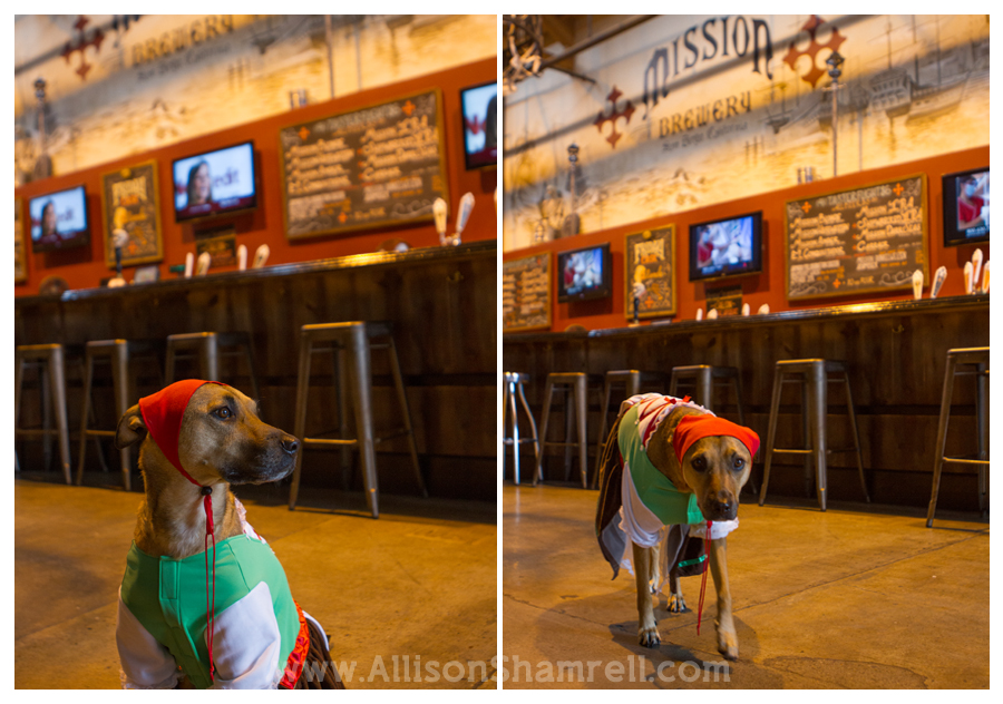 halloween dog costume mission brewery