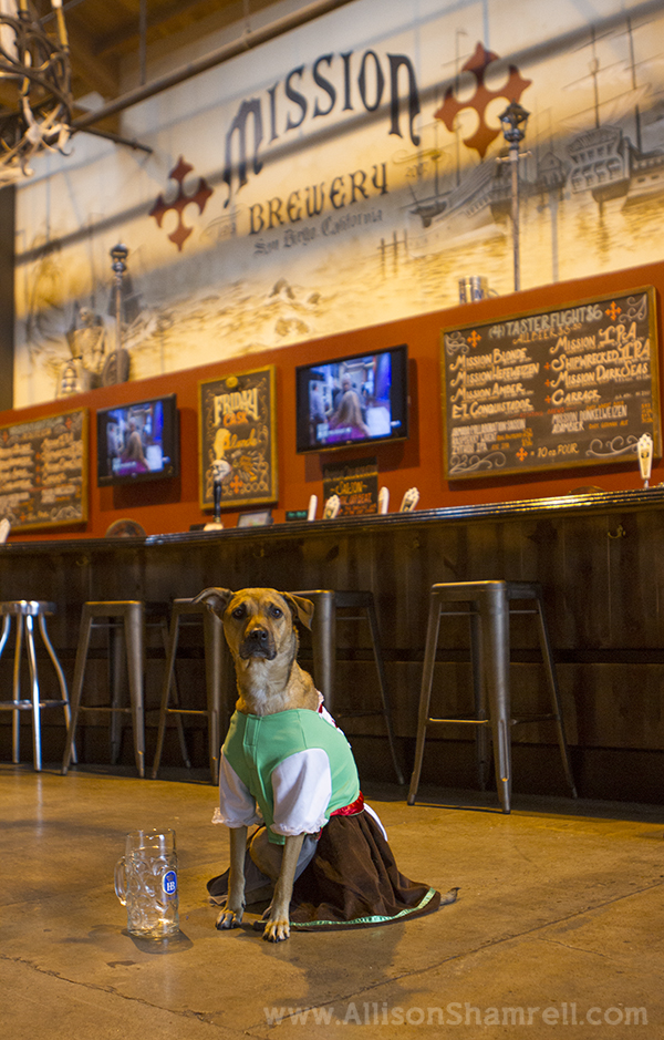 halloween dog mission brewery