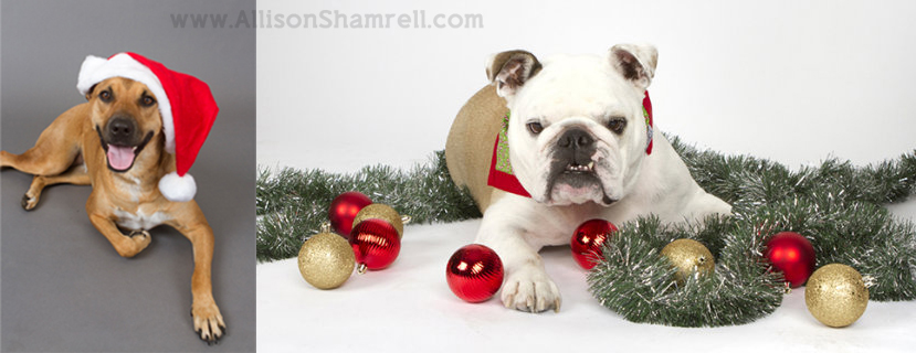 Pet Christmas Cards & Holiday Mini Photo Sessions! San Diego Pet ...