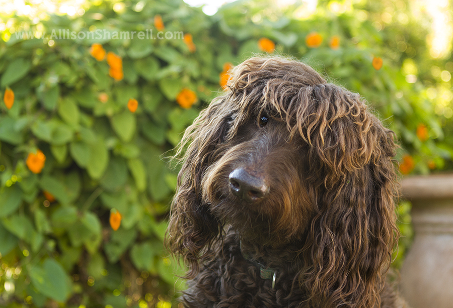 del mar pet photography
