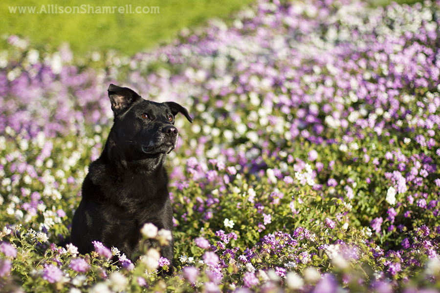 pet photography in flowers